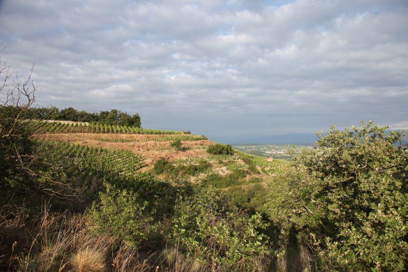 vineyards of Hermitage in Rhône wine region