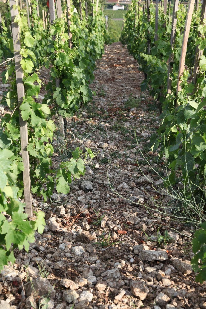 soil and vineyards