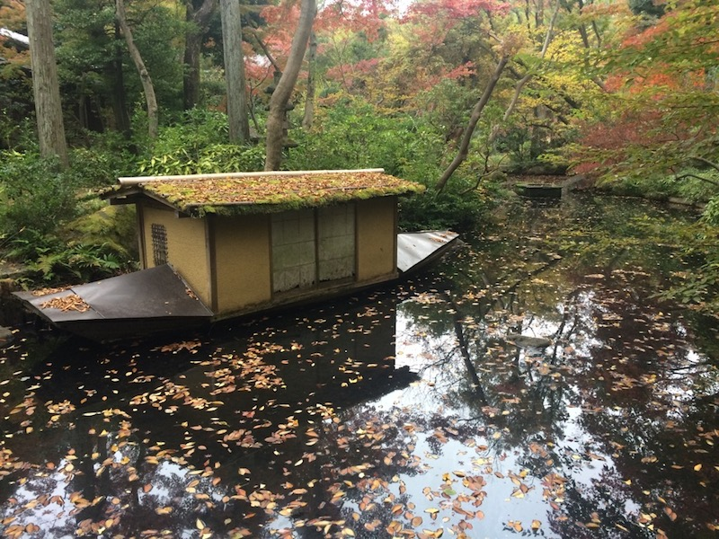 Fall leafs at the garden in Japan