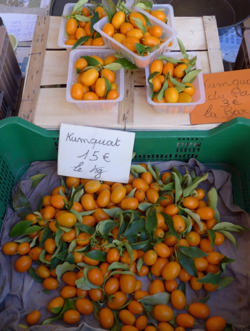 Kumquats from the Mediterranean coastal orchards