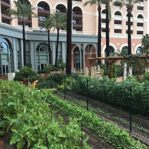 Terre de Monaco urban agriculture