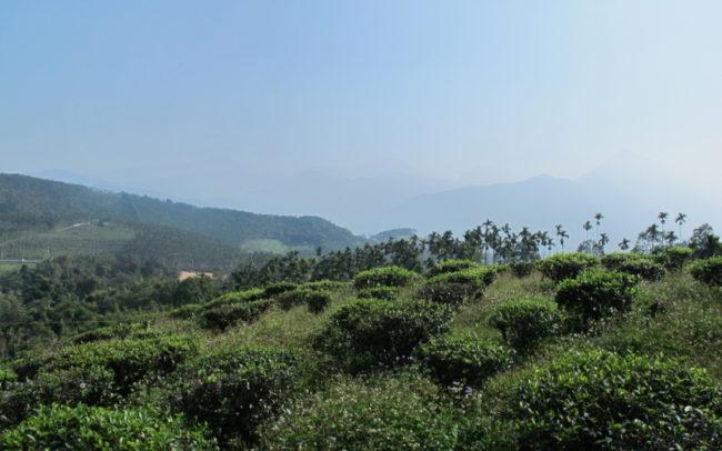 The beauty of making tea in Taiwan