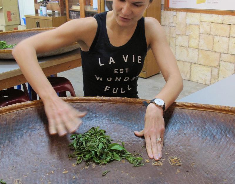 Hand rolling tea leafs