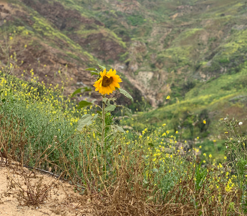 Malibu hiking trails