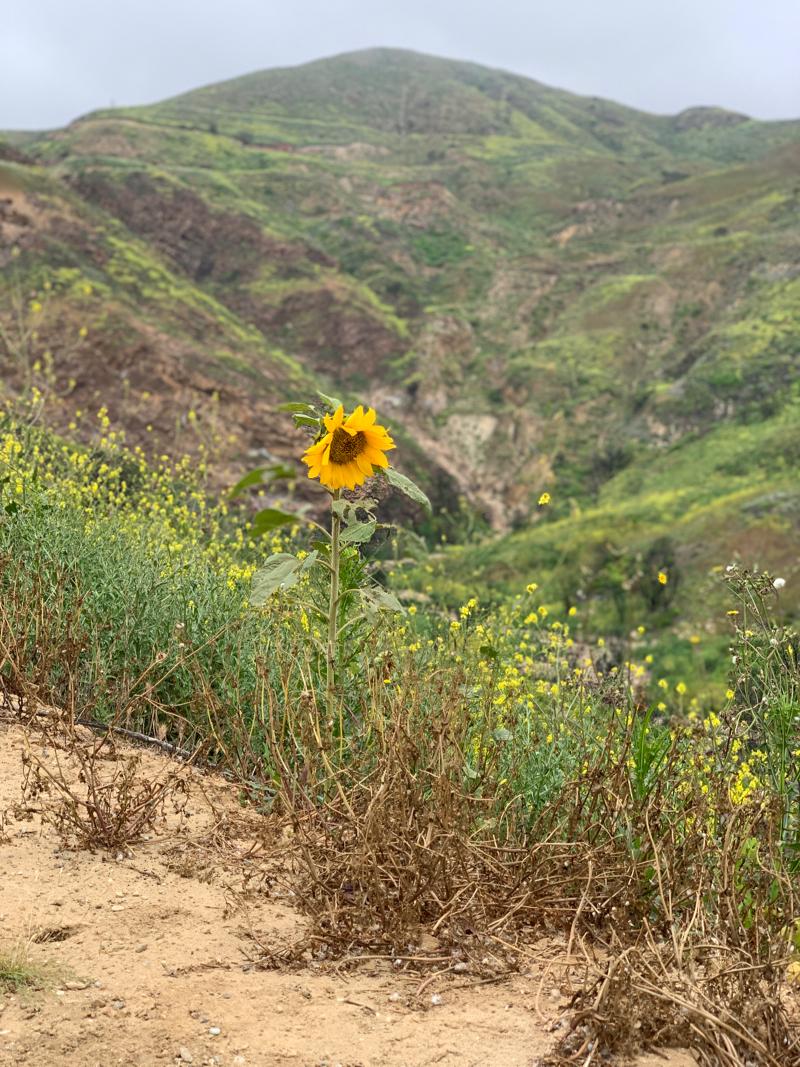 Malibu hiking trails love poem