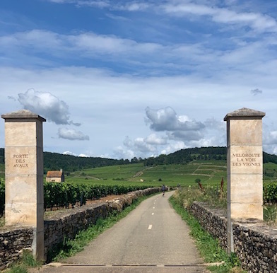 Beaune: in the heart of the wines of Burgundy on foot or bicycle